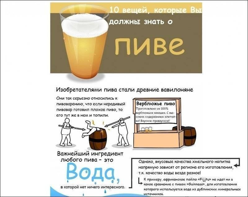 Пиво: как его почитают и какое предпочитают? история и интересные факты.  | еда и кулинария | школажизни.ру