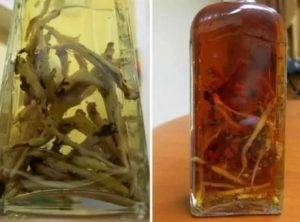 Рецепт приготовления настойки золотого корня на водке (спирту, самогоне). золотой корень — лечебные свойства и противопоказания родиолы розовой