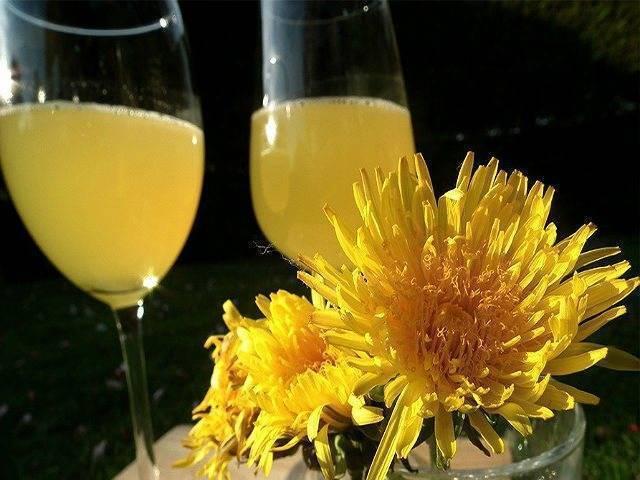 Вино из одуванчиков. рецепт приготовления в домашних условиях