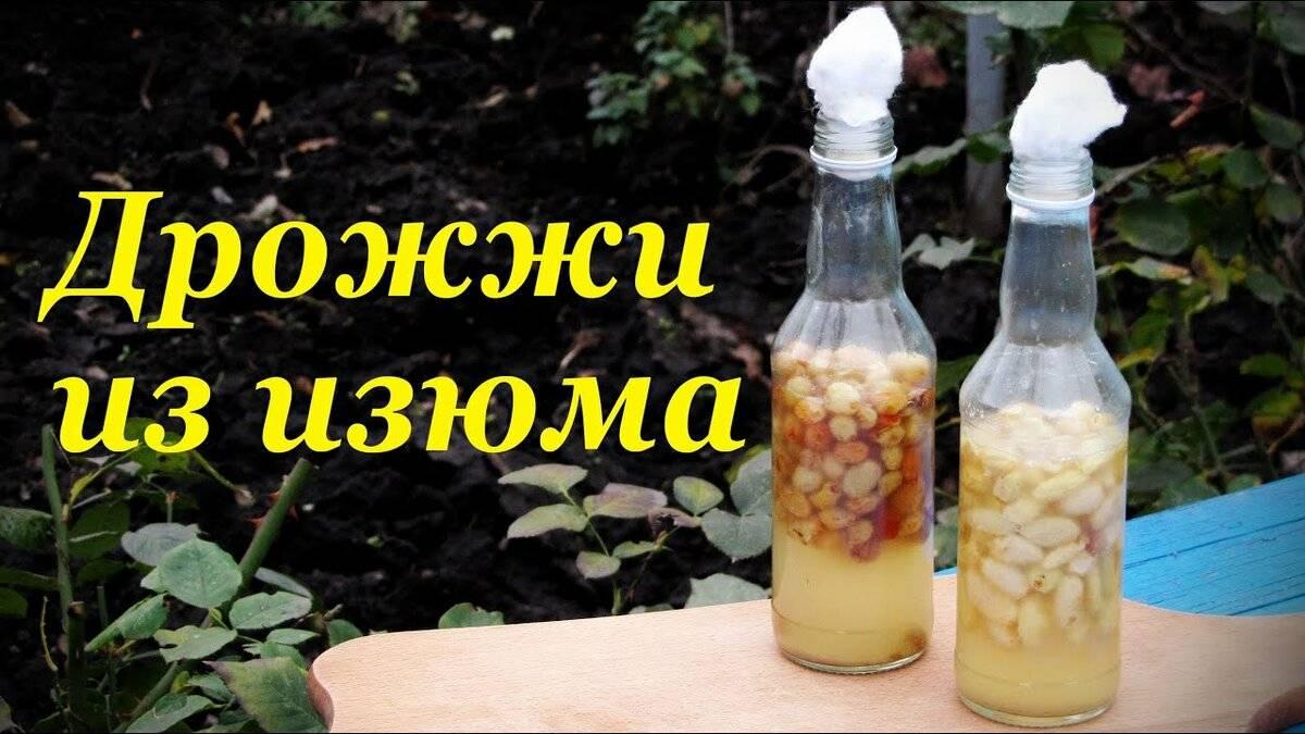 3 способа приготовления домашних винных дрожжей