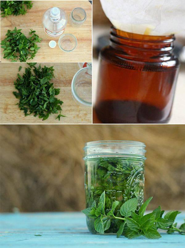 Настойка лимонно-мятная / настойки / tvcook: пошаговые рецепты с фото