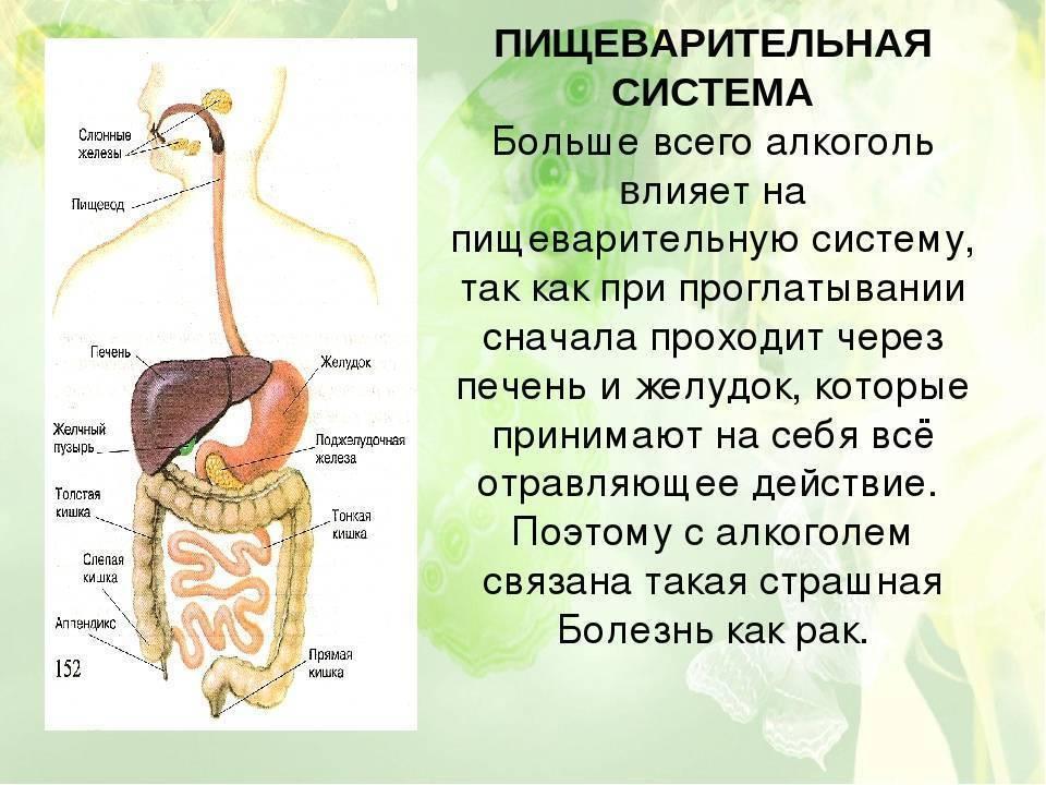 Может ли болеть желудок от курения и как оно влияет на пищеварительную систему