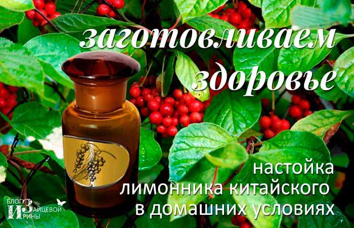 Настойка из лимонника: 4 рецепта + свойства и применение