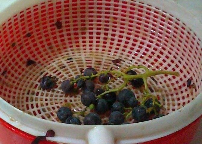 Чача из винограда в домашних условиях - как готовить крепкий напиток из жмыха и этапы перегонки