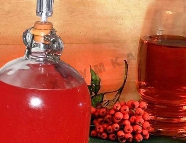 Вино из калины в домашних условиях – экзотический напиток, доступный каждому. рецепты вина из калины в домашних условиях