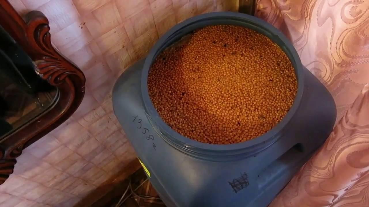 Брага на диких дрожжах пшеницы: как приготовить пшеничный самогон сэм, рецепты заброда
