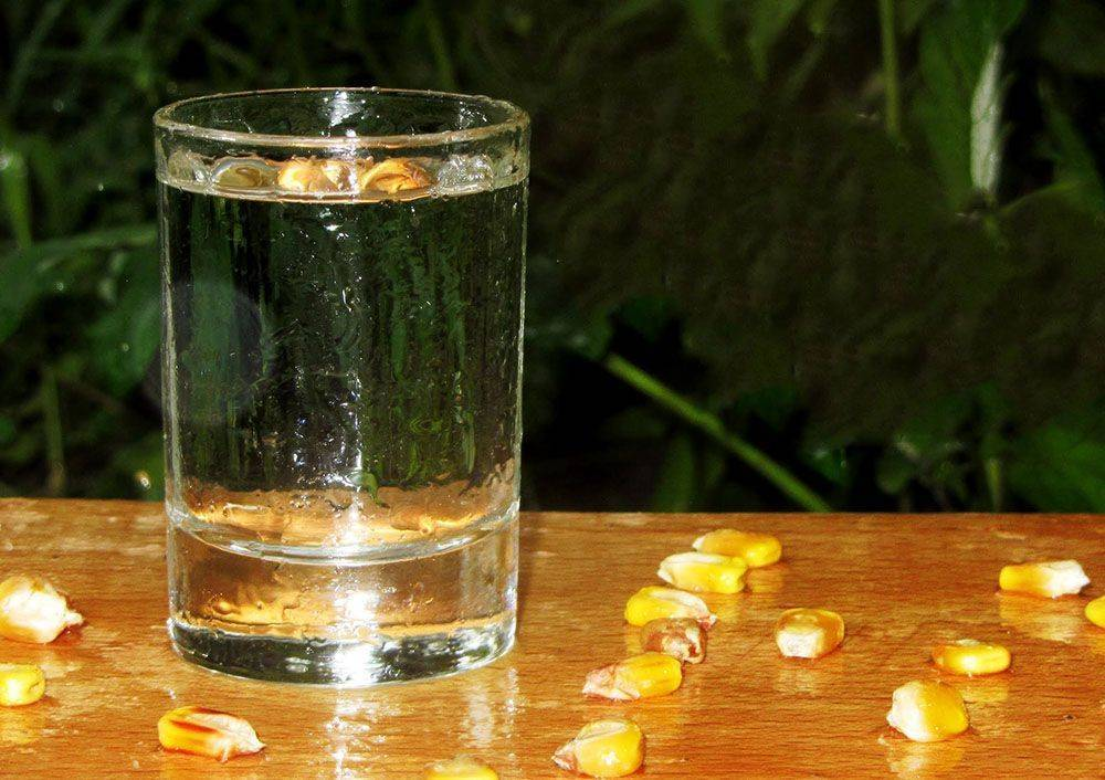 Самогон из кукурузы: как сделать кукурузную брагу, выгнать самогонку
