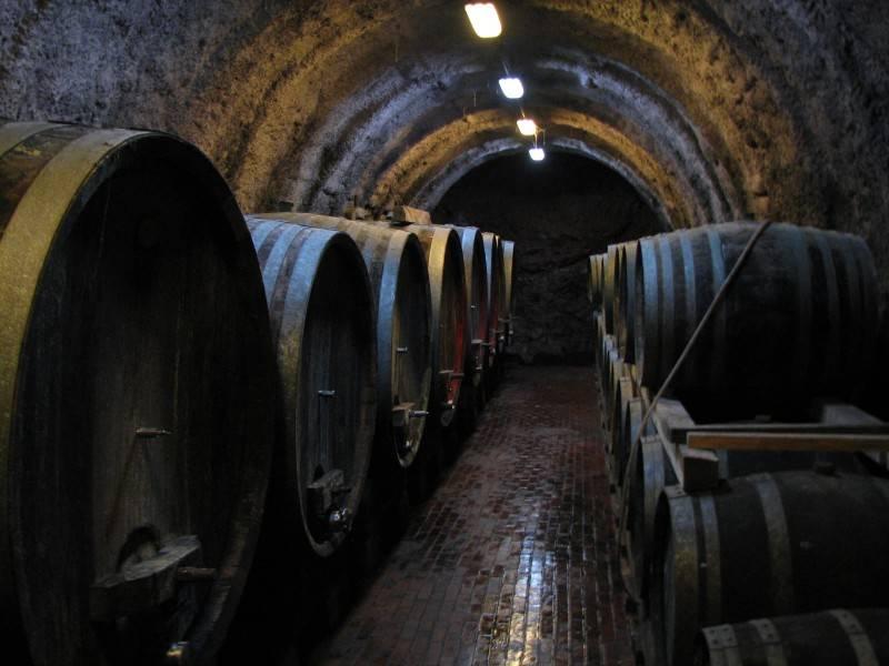 Биодинамическое вино — что это такое, состав, отличия от биологического, органического. крымские, россии, европейские