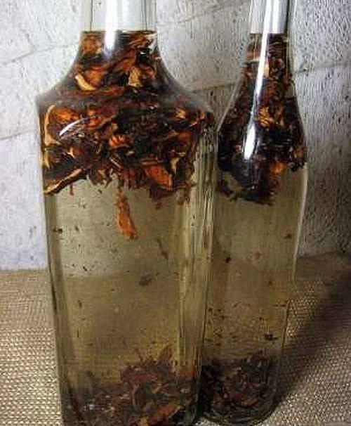 Грибная настойка из чаги на водке
