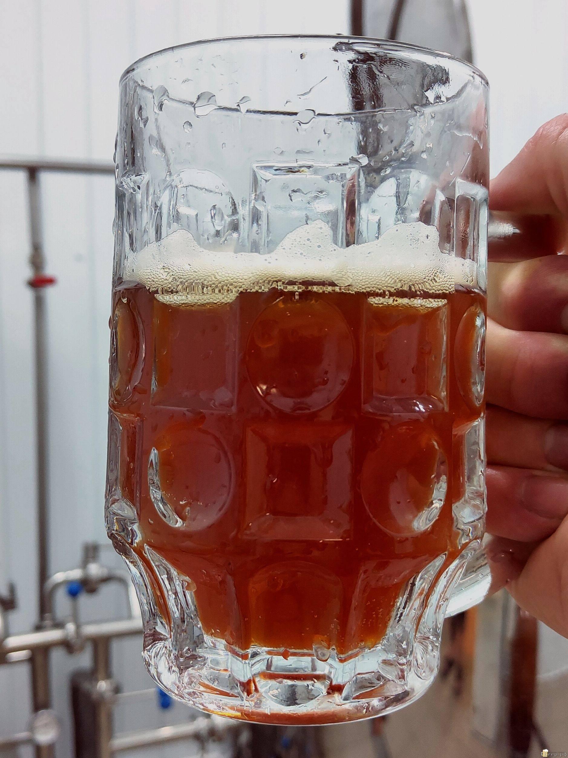 Рецепт светлого пива для приготовления в домашних условиях