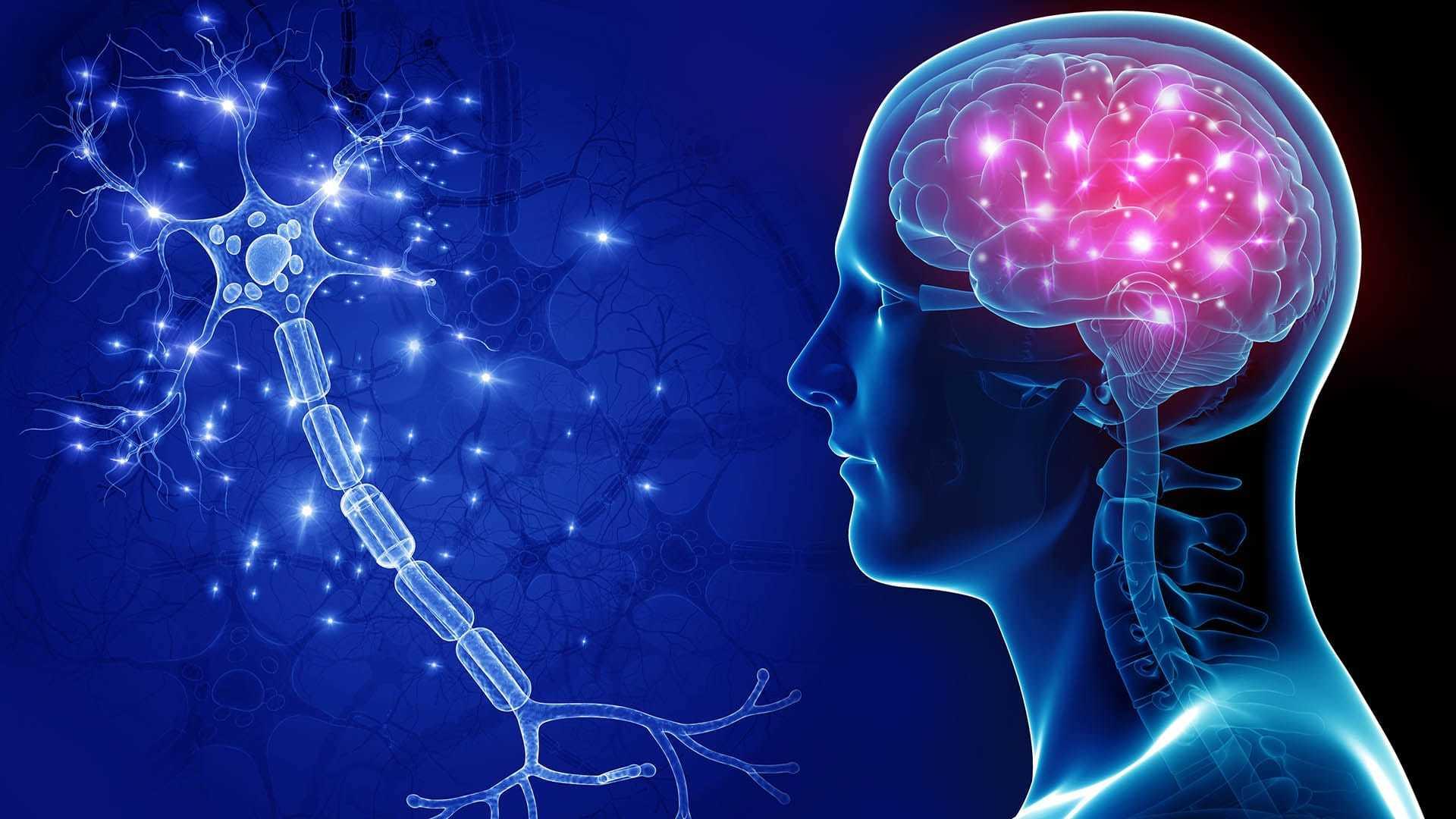 Как спиртное влияет на мозг и кого оно сделало умнее