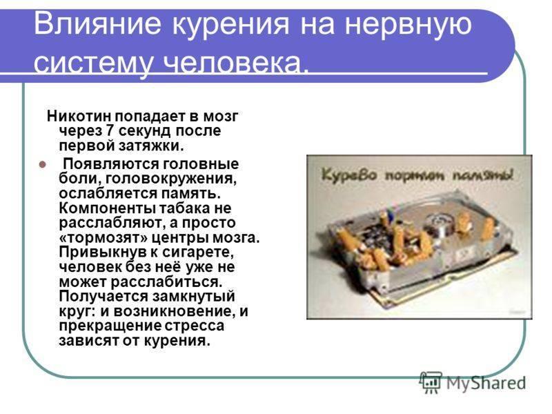 Проблема влияния никотина на работу мозга