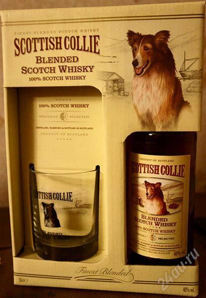 Scottish collie (скоттиш колли)
