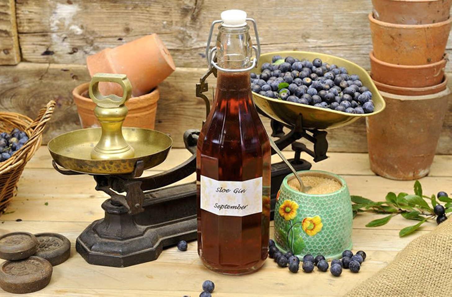 Рецепты настоек из терна на водке, спирте и анисовке