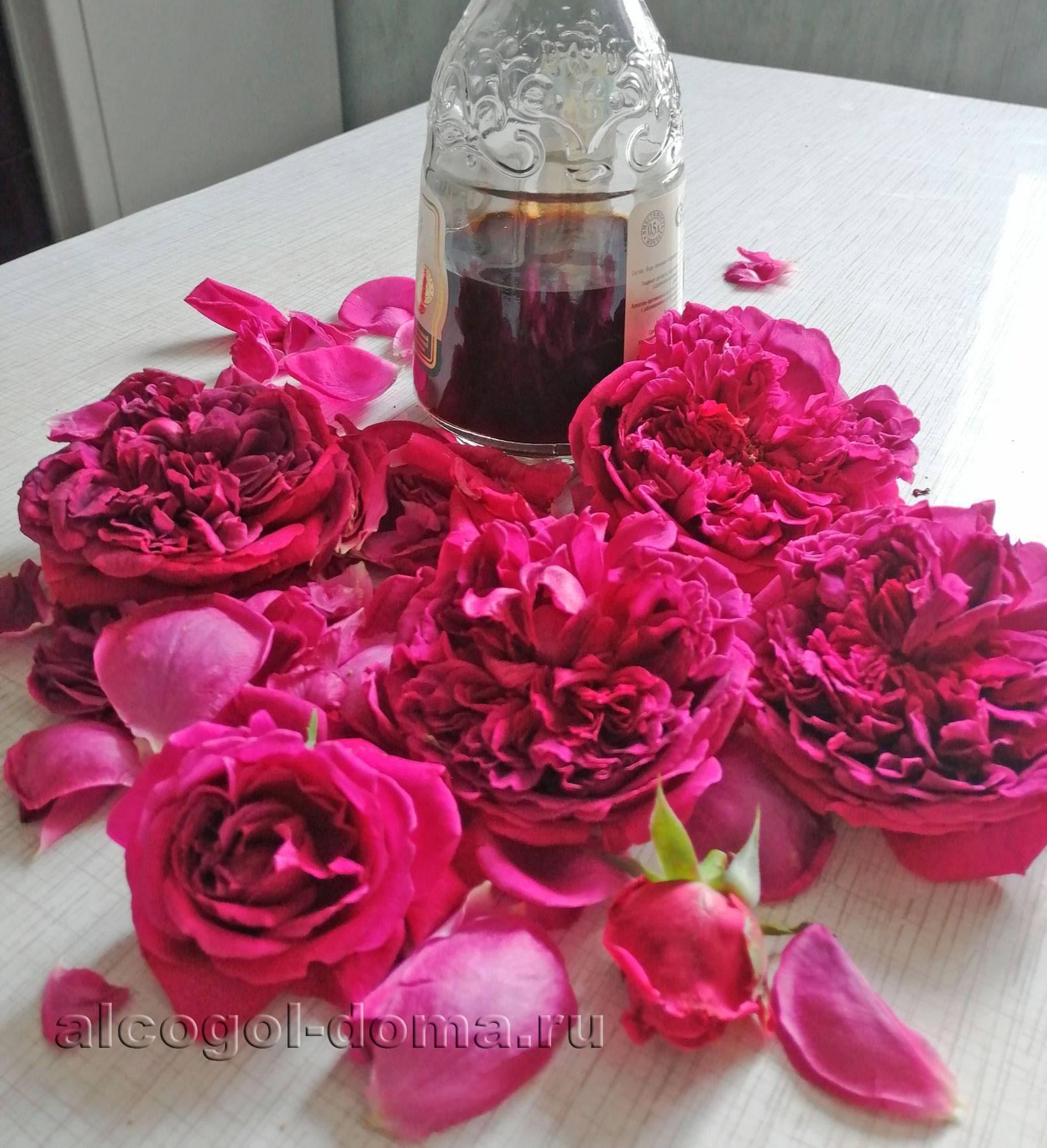 Настойка из лепестков роз: особенности, лечебные свойства, рецепты и применение