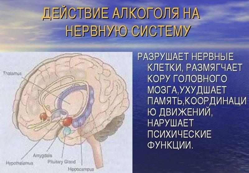 Влияние алкоголя на головной мозг и нервную систему человека