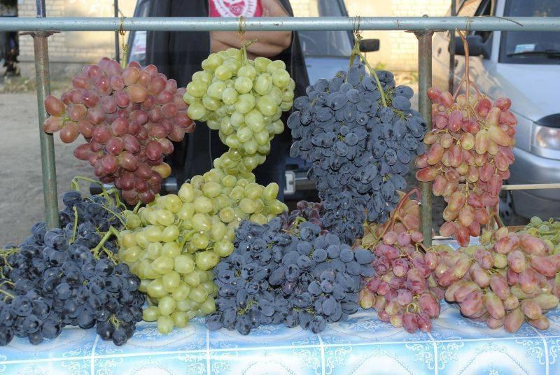 Технические сорта винограда — что это? - про виноград | описание, советы, отзывы, фото и видео