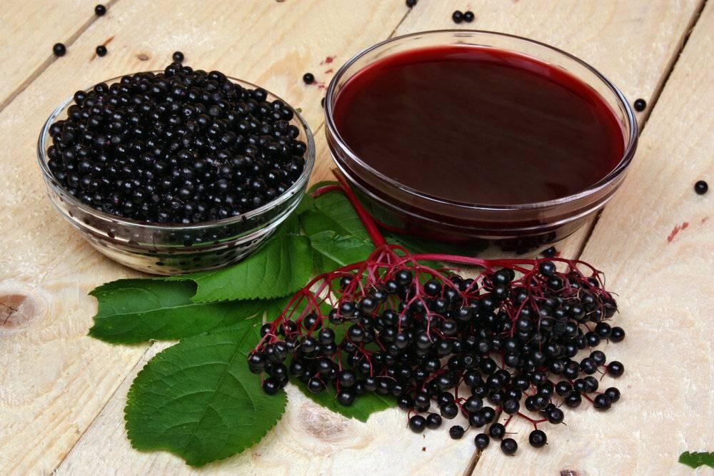 Вино из черноплодной рябины: домашние рецепты