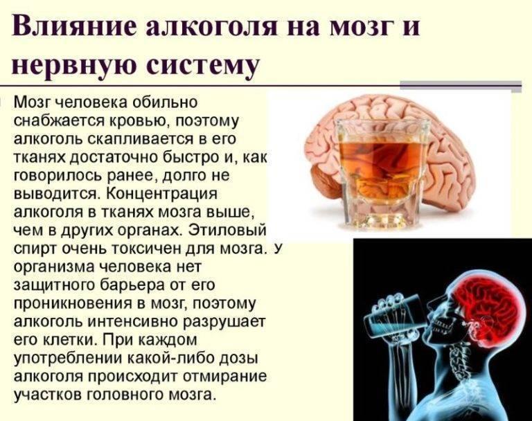 Мозг после злоупотребления алкоголем. Возможно ли восстановление
