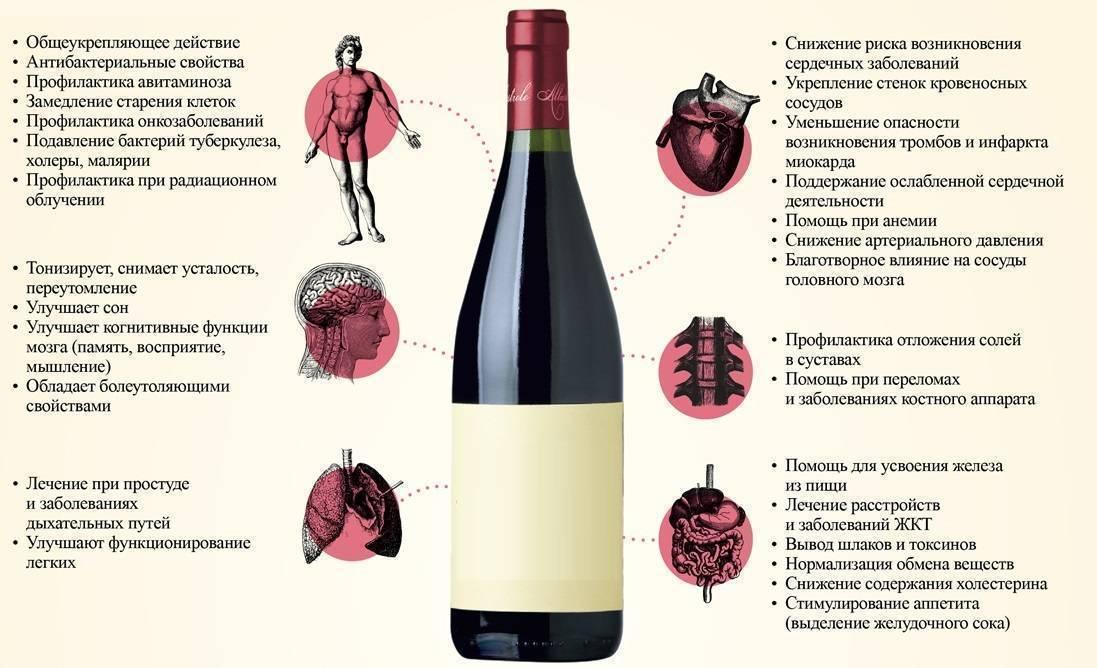 Вред алкоголя для организма человека: как разрушаются органы и системы