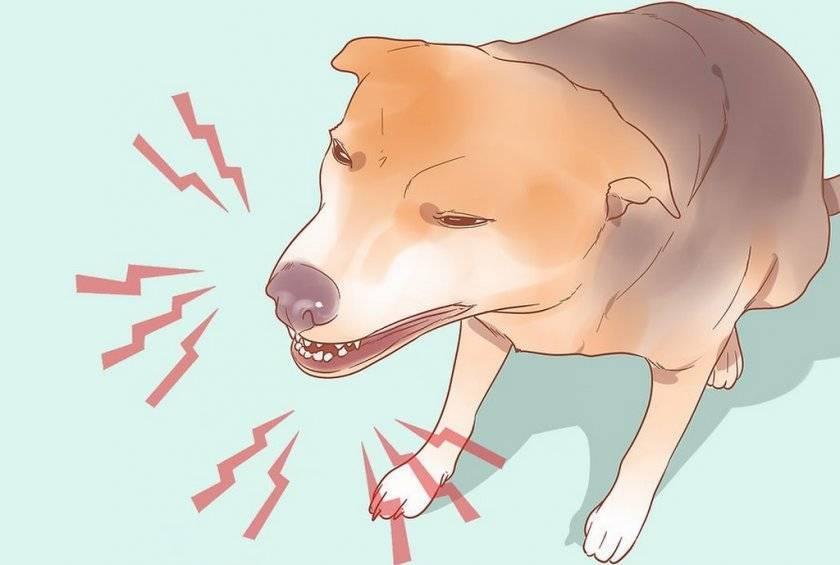 Понос с кровью у собаки: причины и лечение в домашних условиях, слизь в кале, профилактика
