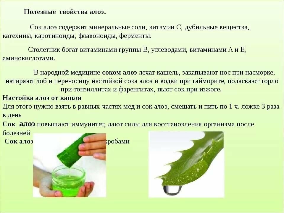 Рецепты настойки на алоэ, польза, применение