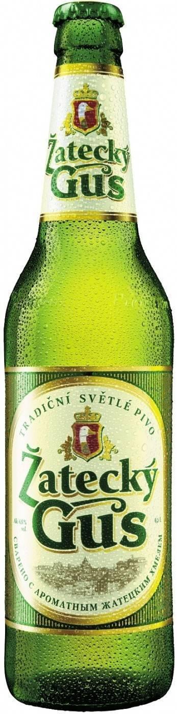 Пиво žatecký gus («жатецкий гусь») - 125 фото, обзор вкусовых качеств, состав и описание внешнего вида