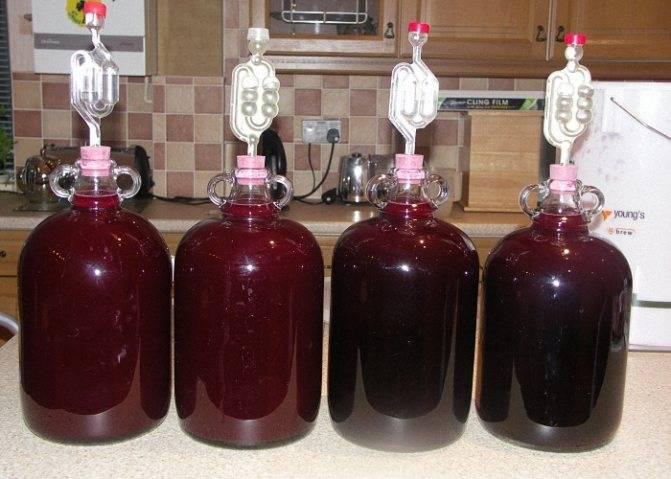 Как превратить компот в ароматное вино?