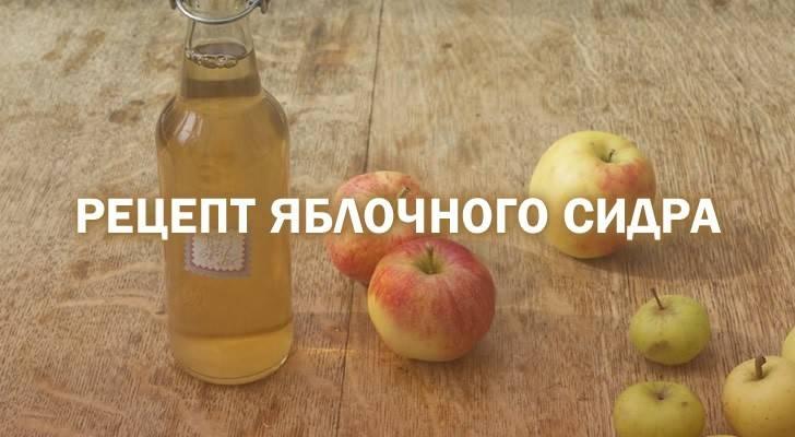Домашний яблочный сидр — рецепт пошаговый с фото