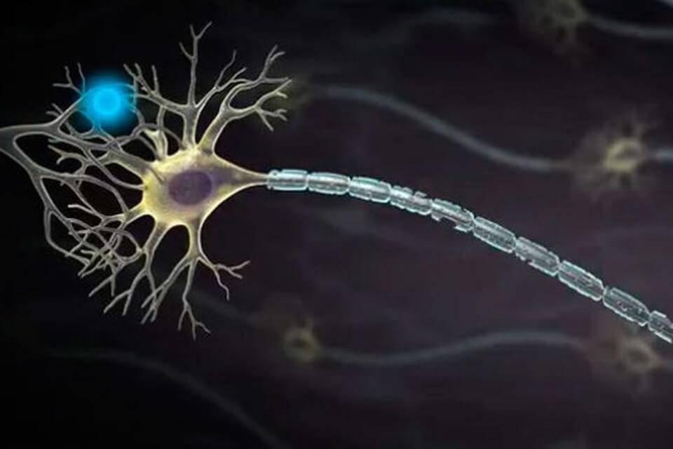 Нервные клетки восстанавливаются или нет: факты и вымыслы, мнения ученых