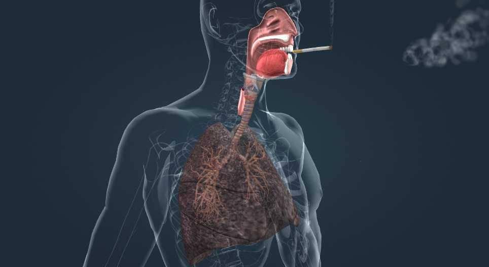 Влияние курения на органы дыхания: как табак воздействует на дыхательную систему человека и какие болезни всего организма у курильщика вызывает? | elesto.ru