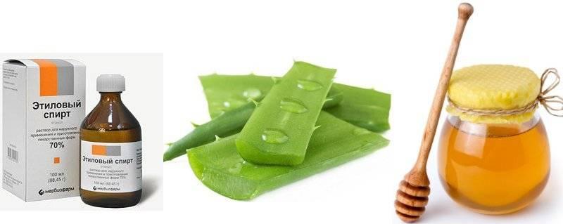 Народный лекарь «с подоконника»: алоэ – растение, которое лечит от 100 болезней. лечебные свойства и применение