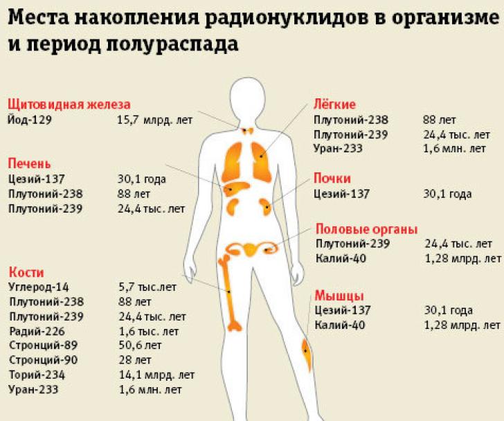 Роль продуктов и алкоголя в выведении радиации из организма