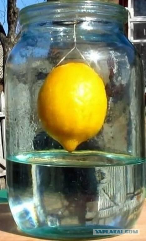 Рецепты домашних настоек самогона на лимоне