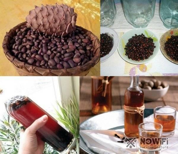 Кедровые орешки на водке – польза и вред, рецепты приготовления настойки