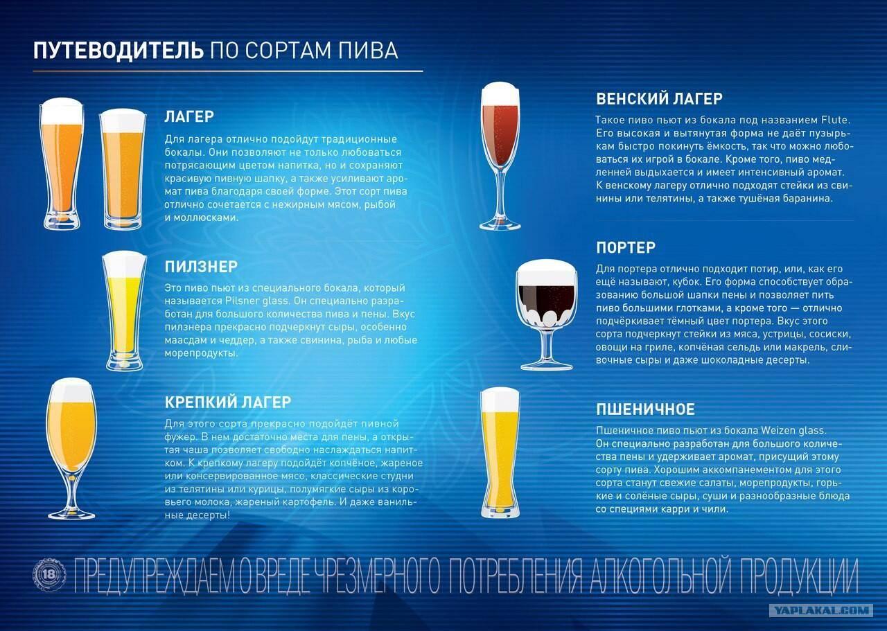 Пиво левенбраун и его особенности