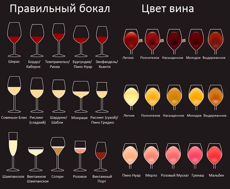 Бокалы для белого вина – какие выбрать, в каких подают, как пить и чем мыть + фото