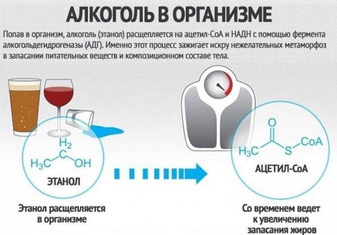 Этапы восстановления организма после длительного употребления алкоголя
