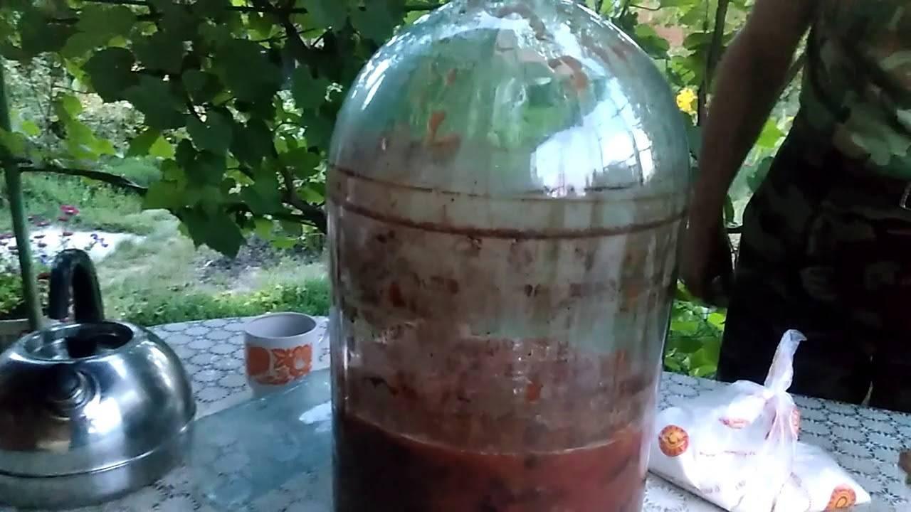Вино из красной алычи в домашних условиях простой рецепт