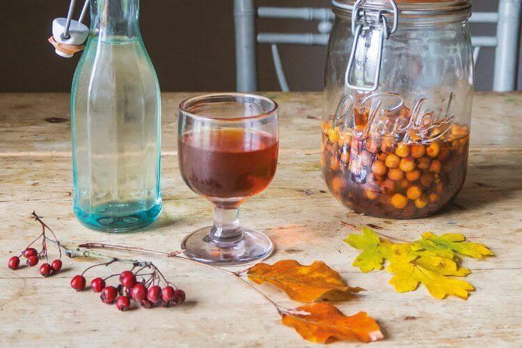 Рецепт настойки самогона на шиповнике — читаем главное