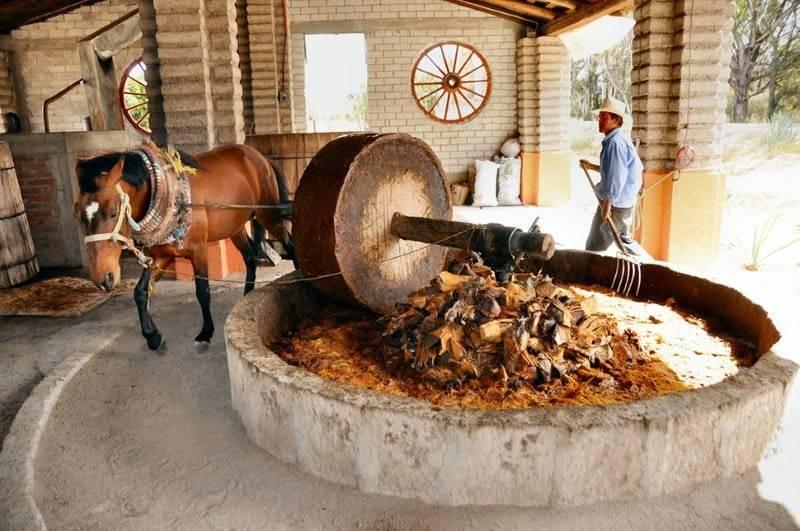 Из чего делают виски: технология производства