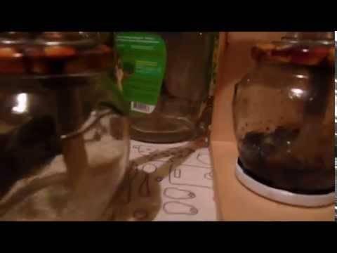 Джин из самогона - рецепты приготовления напитка в домашних условиях