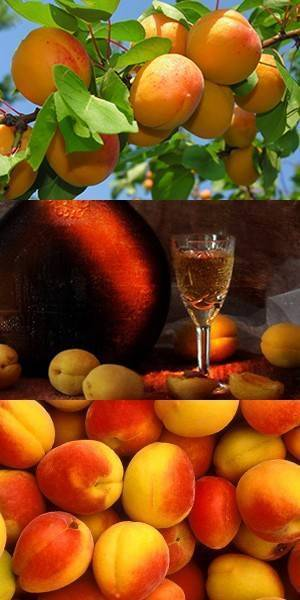 Абрикосовое вино - простые пошаговые рецепты для приготовления в домашних условиях