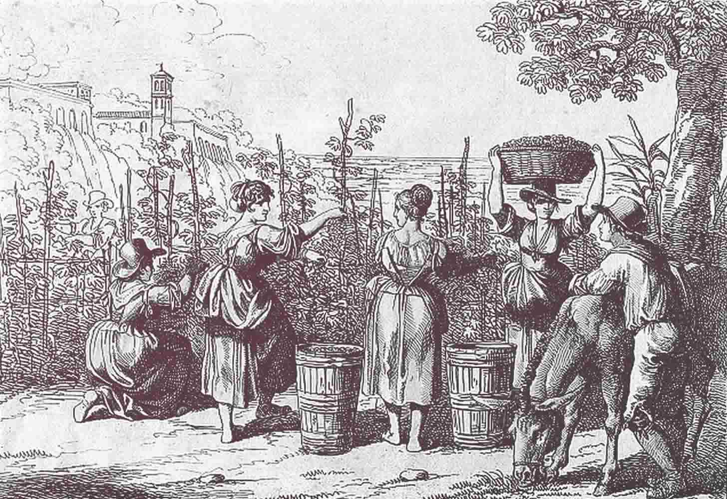 История виноградарства и виноделия во франции от древности до наших дней