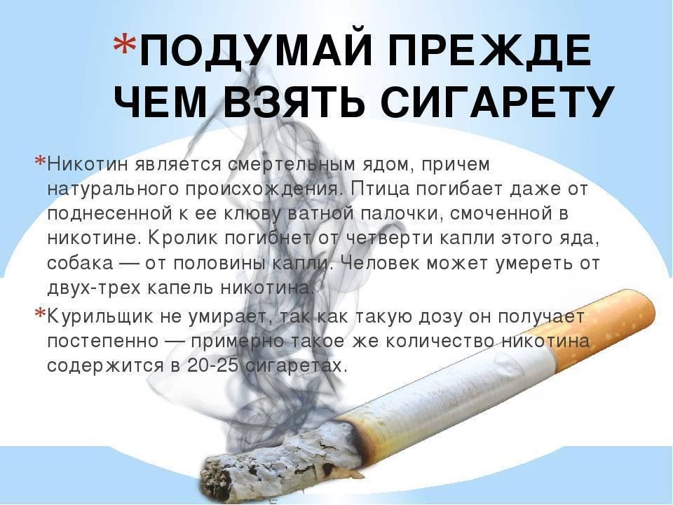 Интересные факты о курении, табаке, никотине, сигаретах