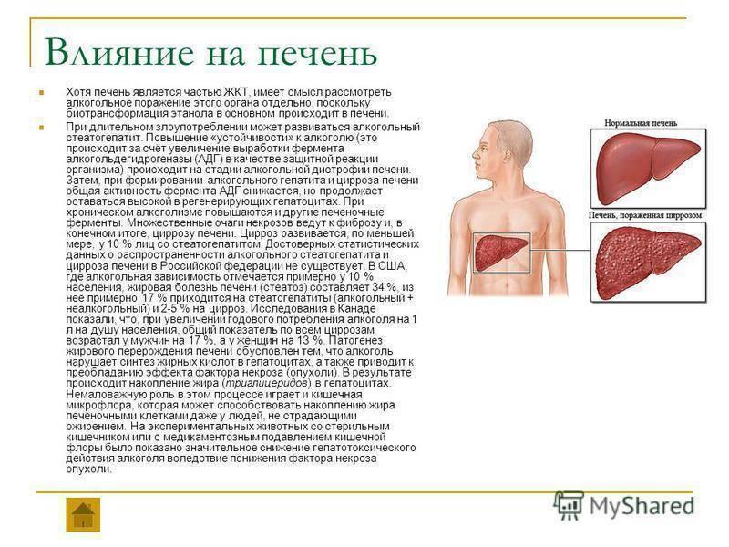 Лечение печени после алкоголя: препараты для очистки и восстановления пострадавшего органа