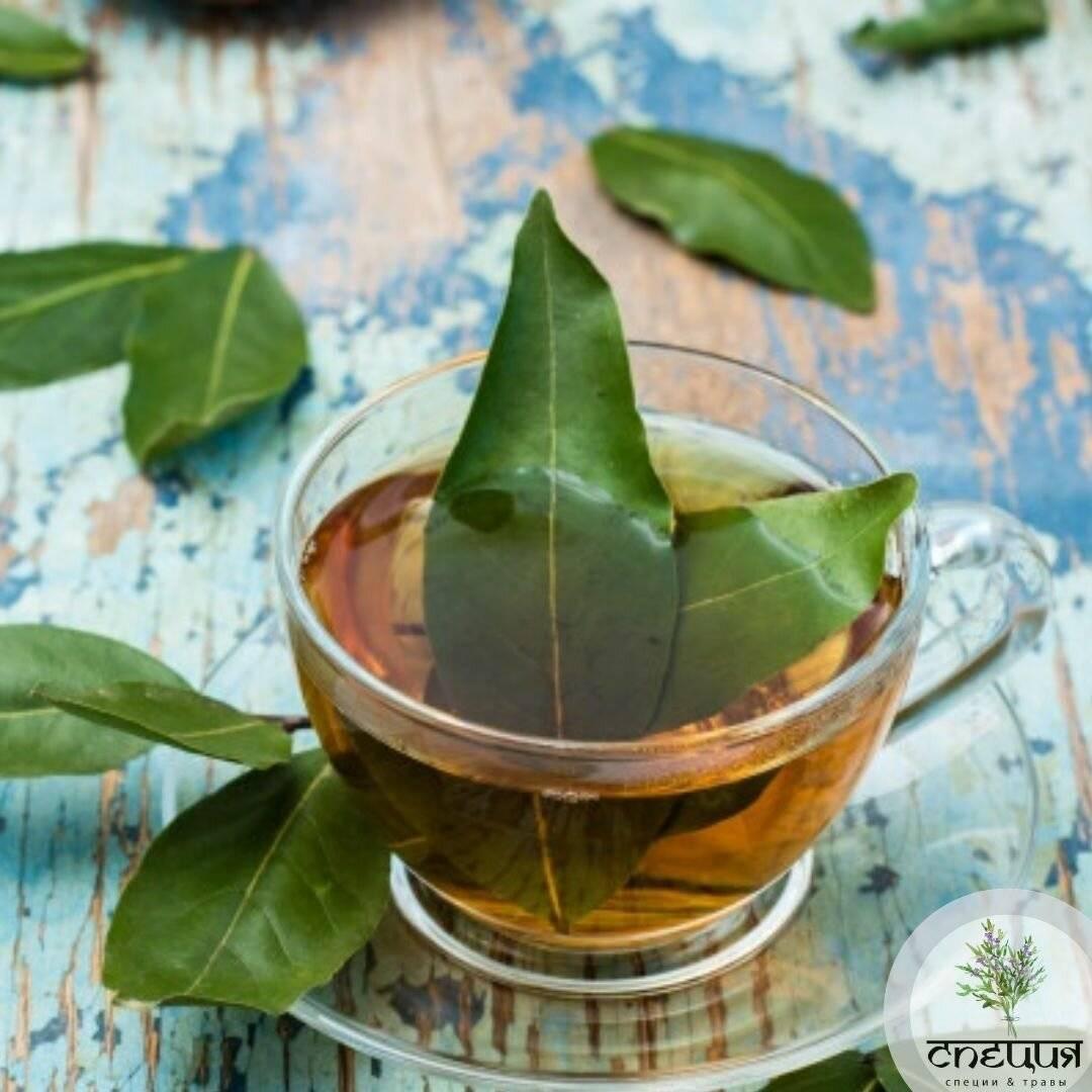 Лекарственная настойка лаврового листа на водке