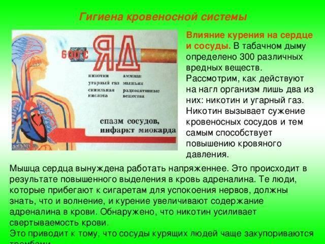 Кровеносные сосуды при курении: с чем необходимо считаться