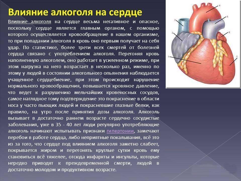 Алкоголь и инфаркт миокарда ⋆ лечение сердца — заболевания сердца