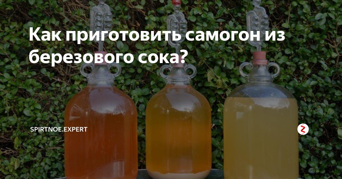 Правила и особенности приготовления браги на березовом соке